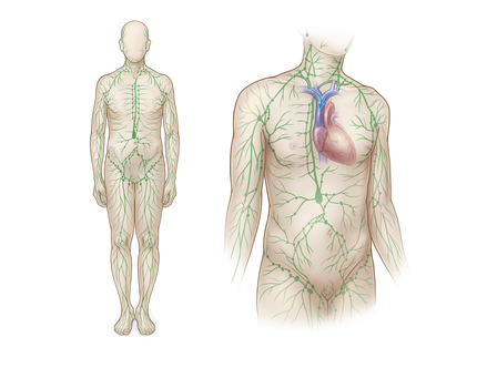 Overview lymphatic system